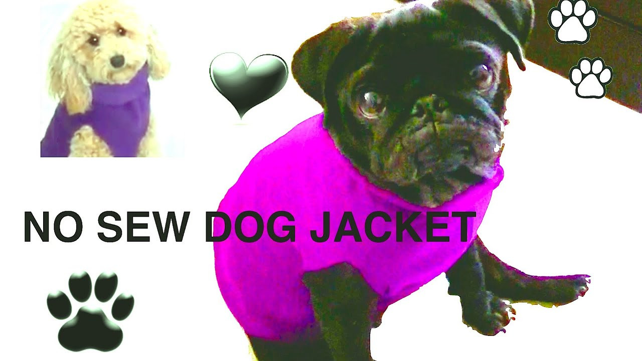 DIY Dog Clothes From Baby Clothes  NO SEW DOG JACKET DIY Dog clothes a tutorial by