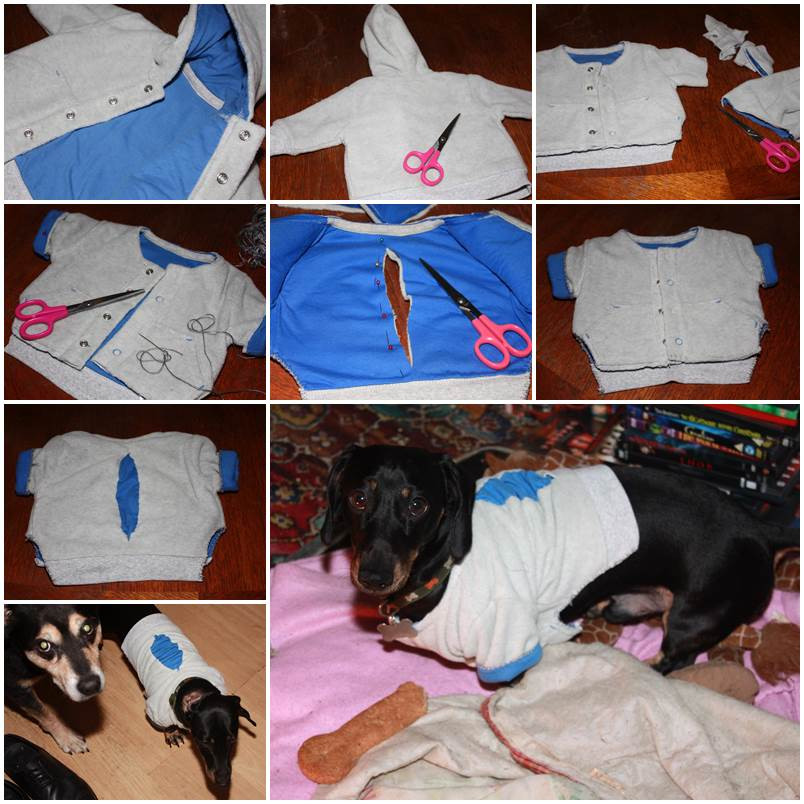 DIY Dog Clothes From Baby Clothes  DIY Sweater Dog Clothes