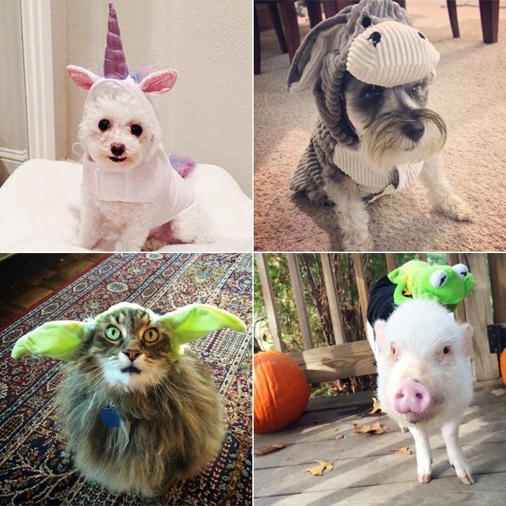 DIY Halloween Costume For Dogs  DIY Pet Costume Ideas