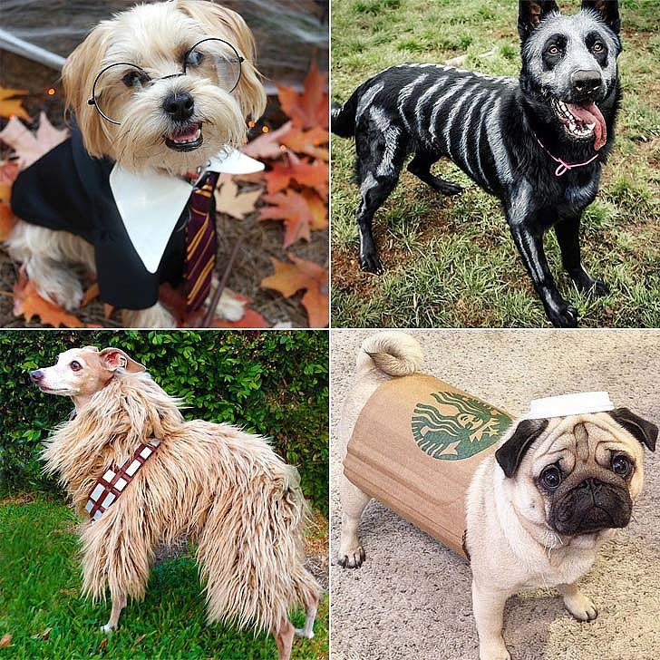 DIY Halloween Costume For Dogs  DIY Halloween Costumes For Dogs