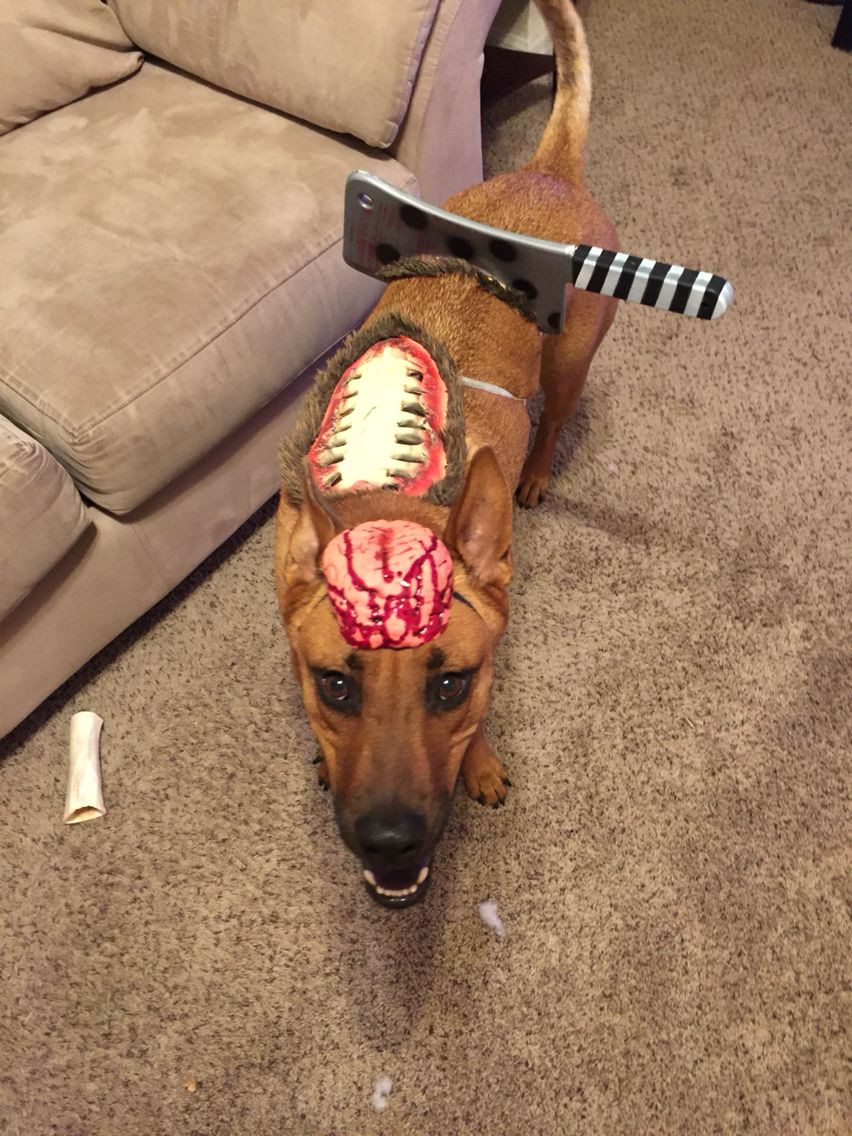 DIY Halloween Costume For Dogs  DIY zombie dog costume Dog Costumes