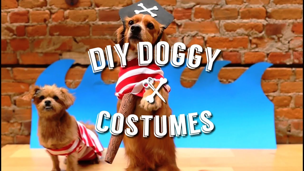 DIY Halloween Costume For Dogs  EASY DIY HALLOWEEN COSTUMES FOR YOUR PET DOG