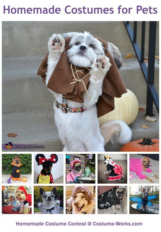 DIY Halloween Costume For Dogs  Best 25 Cute dog costumes ideas on Pinterest