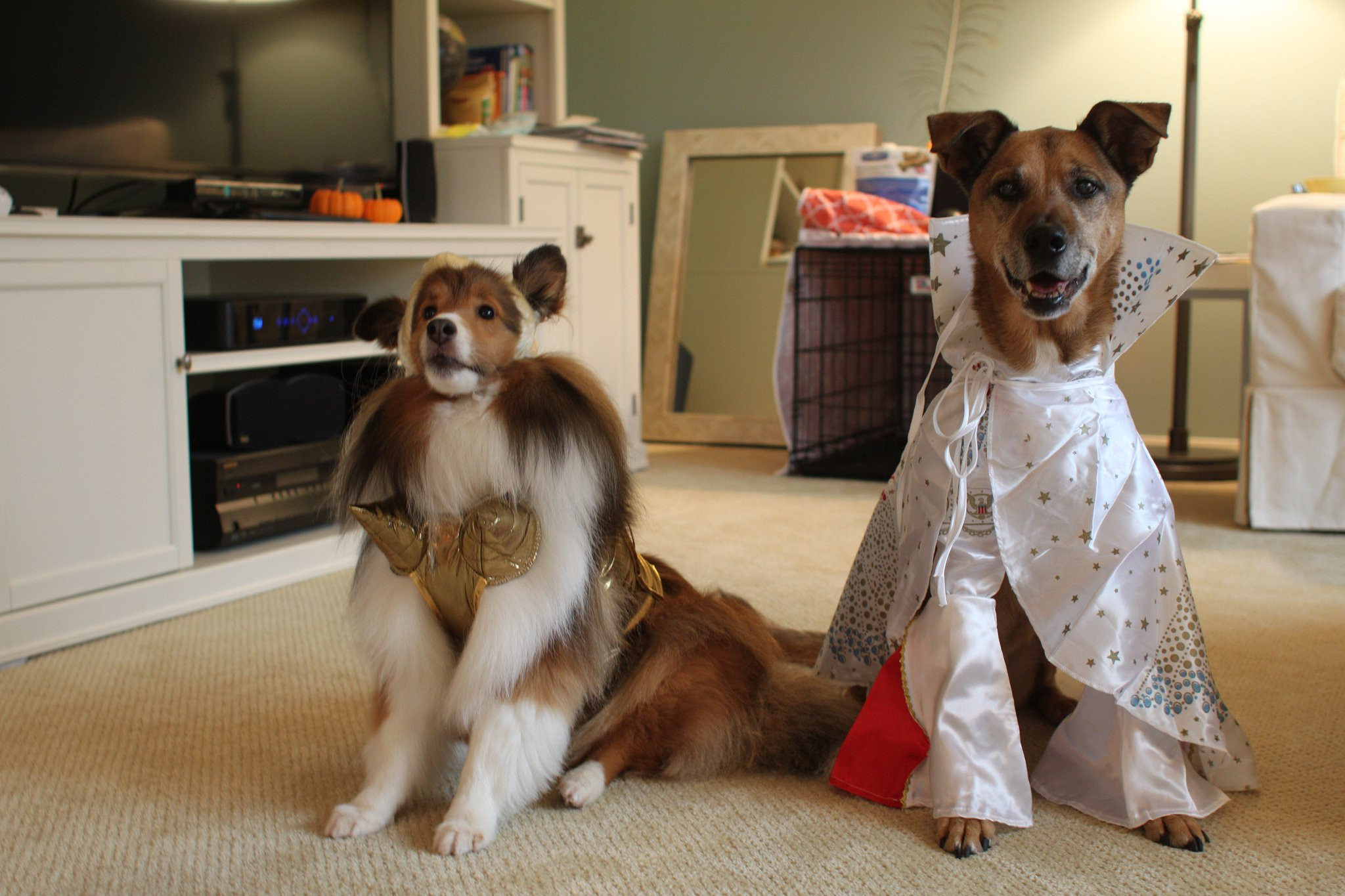 DIY Halloween Costume For Dogs  DIY Dog Costumes for All Shapes and Sizes