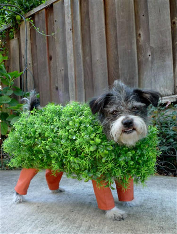 DIY Halloween Costume For Dogs  The Best Halloween Costume Ideas For Your Dogs 23 Pics