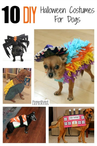 DIY Halloween Costume For Dogs  10 DIY Halloween Costumes for Dogs