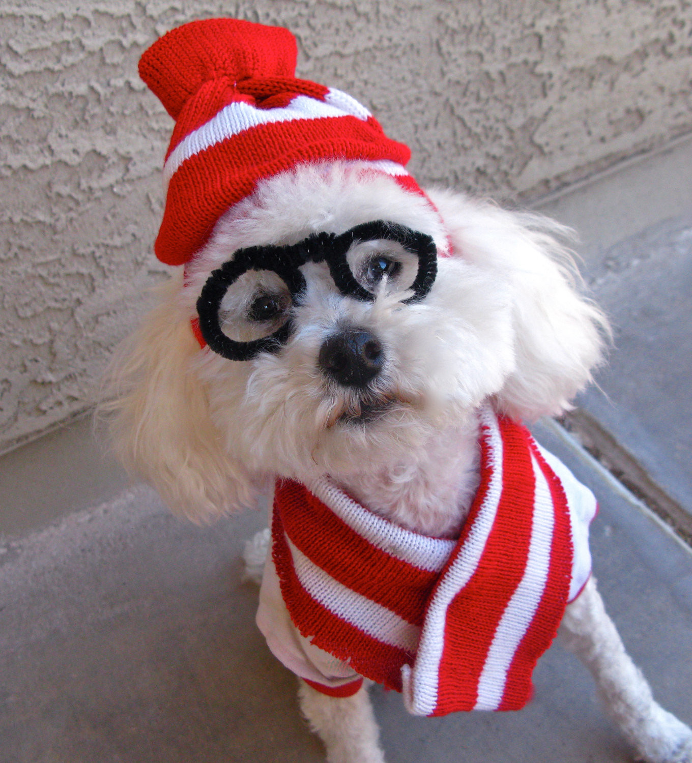 DIY Halloween Costume For Dogs  Last Minute DIY Halloween Costumes for Your Dog Broke