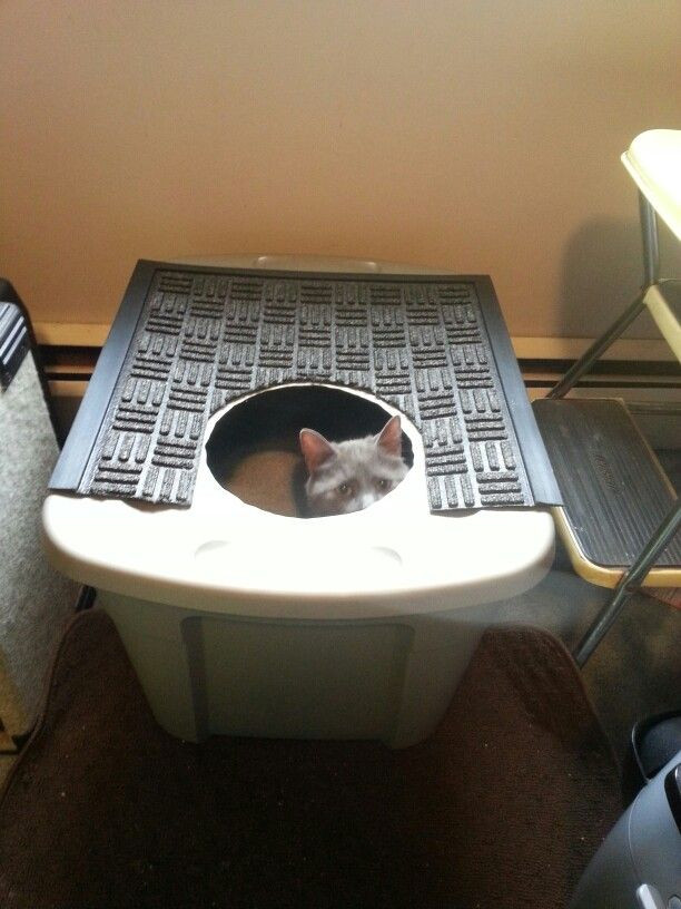 "DIY Top Entry Litter Box  ""Frugal Feline"" diy Clever Cat top entry litter box Cut a"