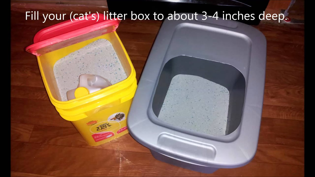 DIY Top Entry Litter Box  DIY Top Entry Cat Litter Box For Under $5 Dollars