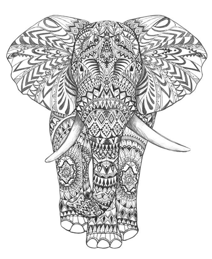 Elephant Coloring Book For Adults  coloring pages for adults difficult elephants Google