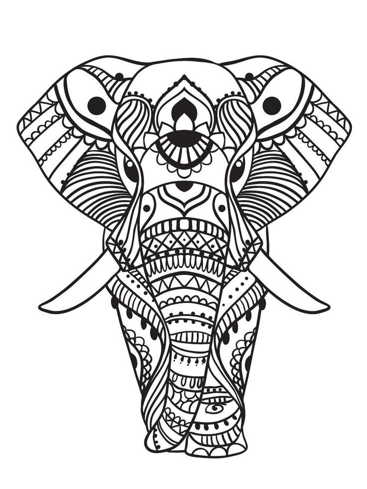 Elephant Coloring Book For Adults  173 best Elephant Coloring Pages for Adults images on