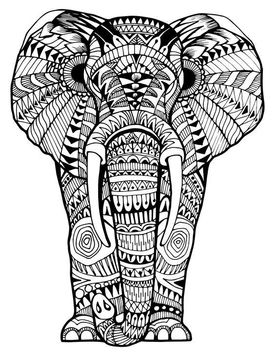 Elephant Coloring Book For Adults  159 best Elephant Coloring Pages for Adults images on
