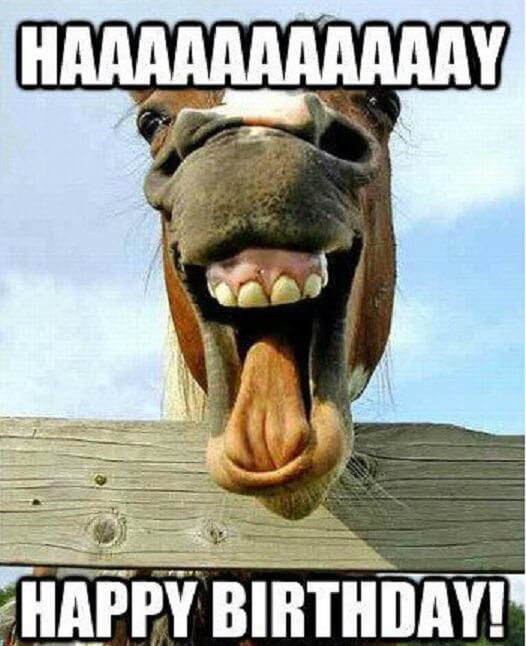 Free Happy Birthday Images Funny  Top 150 Happy Birthday Funny Meme 2019