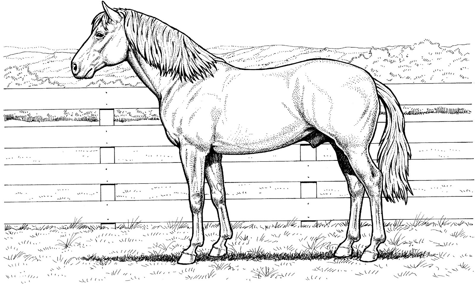 Free Printable Realistic Horse Coloring Pages  Realistic Coloring Pages Horses