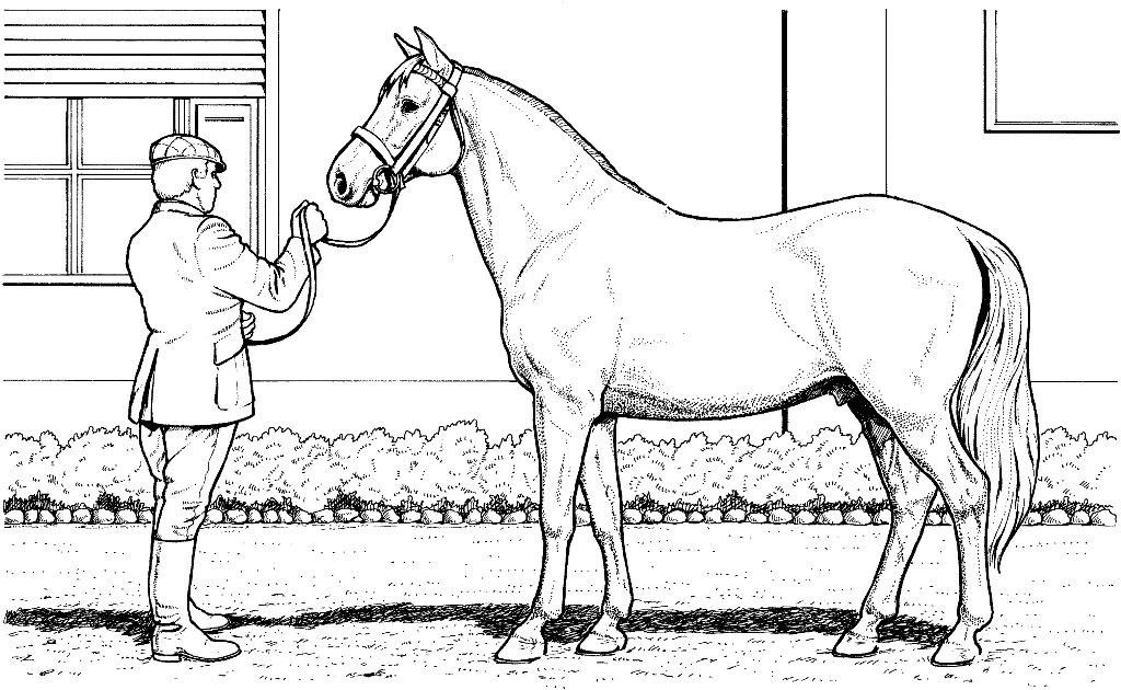 Free Printable Realistic Horse Coloring Pages  realistic horse coloring pages to print gianfreda