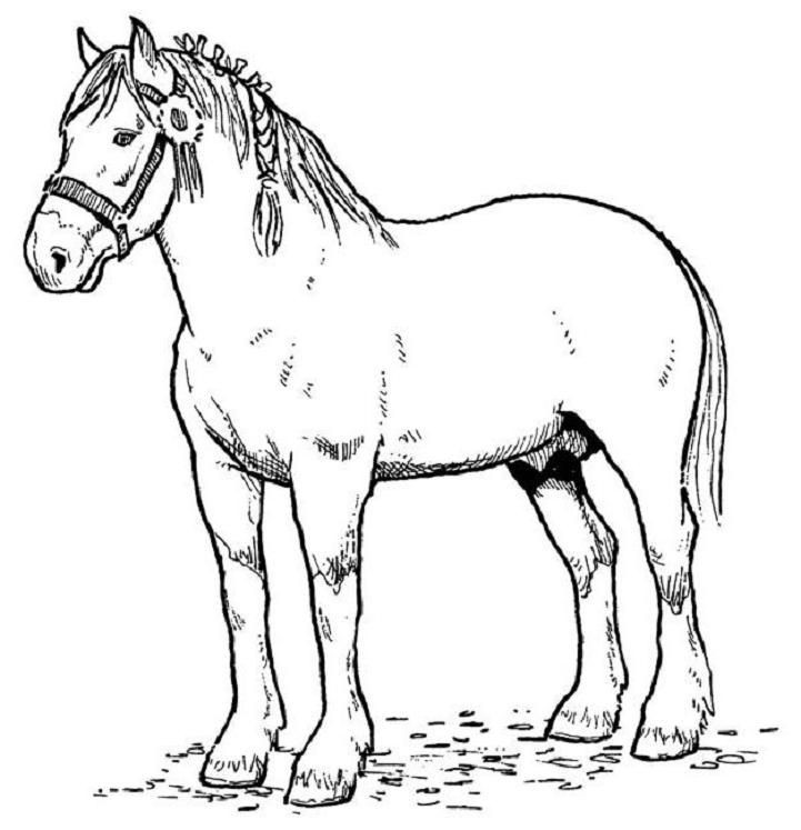 Free Printable Realistic Horse Coloring Pages  Coloring Horses on Pinterest