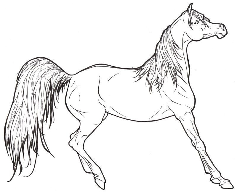 Free Printable Realistic Horse Coloring Pages  Realistic Horse Coloring Pages To Print Coloring Home