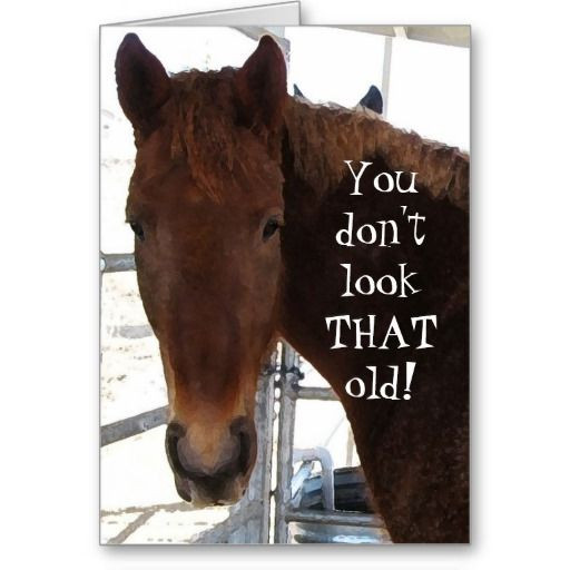 Funny Horse Birthday Pictures  95 best images about Horse Birthday Quotes on Pinterest