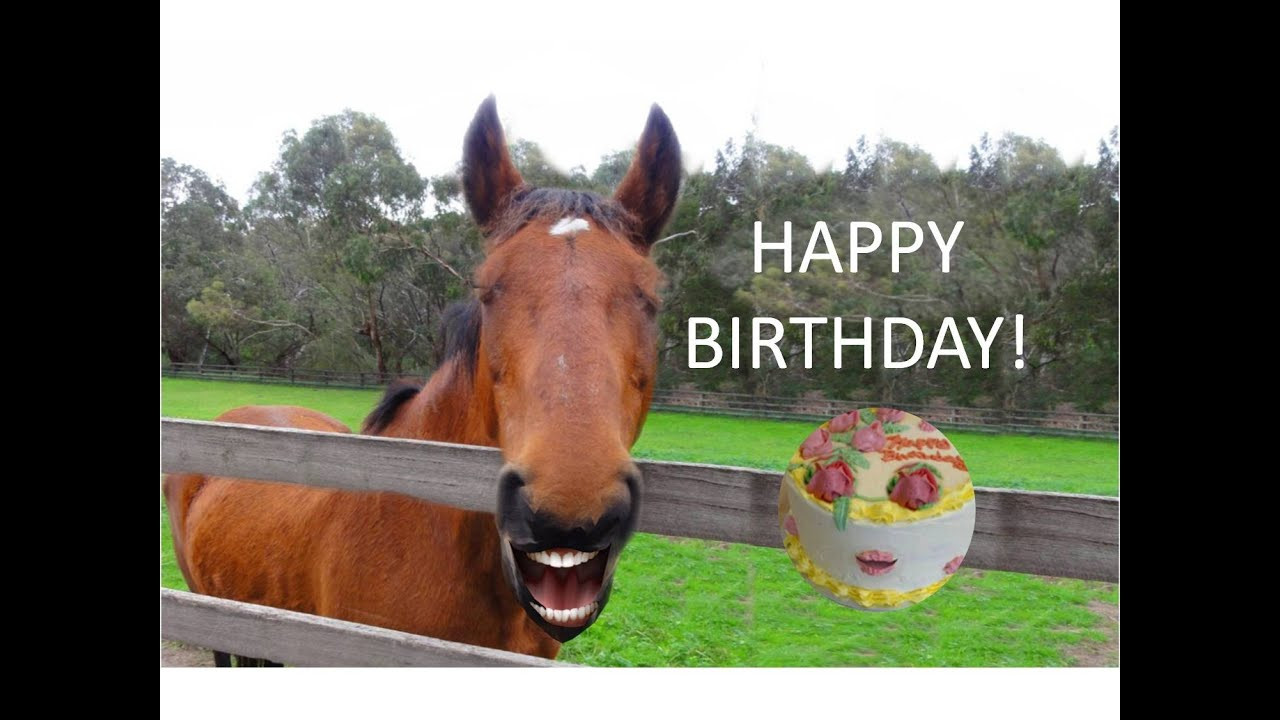 Funny Horse Birthday Pictures  FUNNY HORSE Singing Happy Birthday
