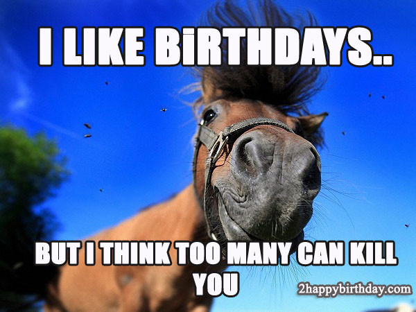 Funny Horse Birthday Pictures  Happy Birthday Horse Meme & Funny Songs 2HappyBirthday