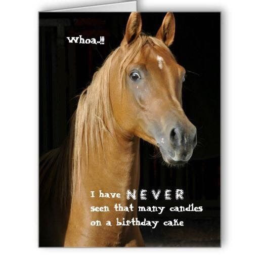 Funny Horse Birthday Pictures  109 best Horse Birthday Quotes images on Pinterest
