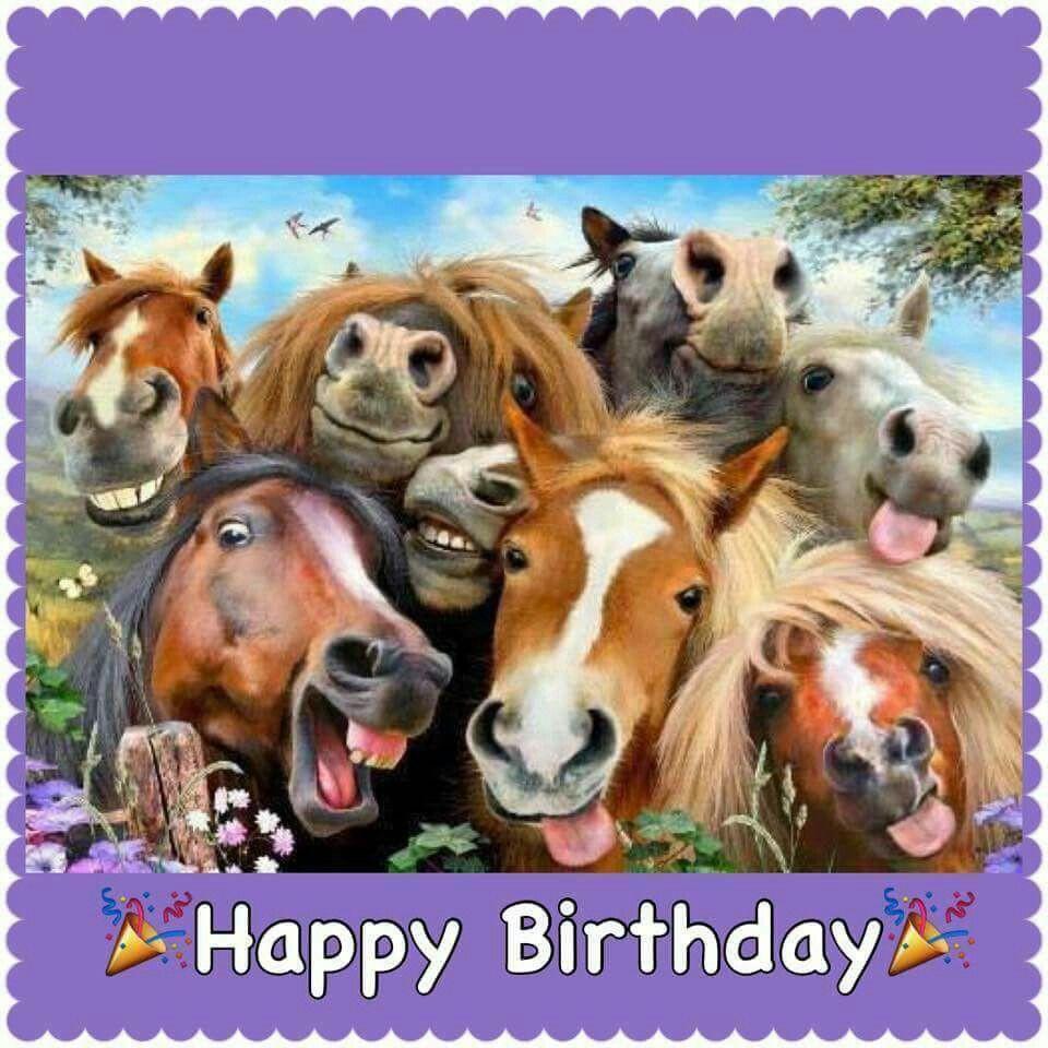 Funny Horse Birthday Pictures  Feliz aniversário Rsrs Birthday