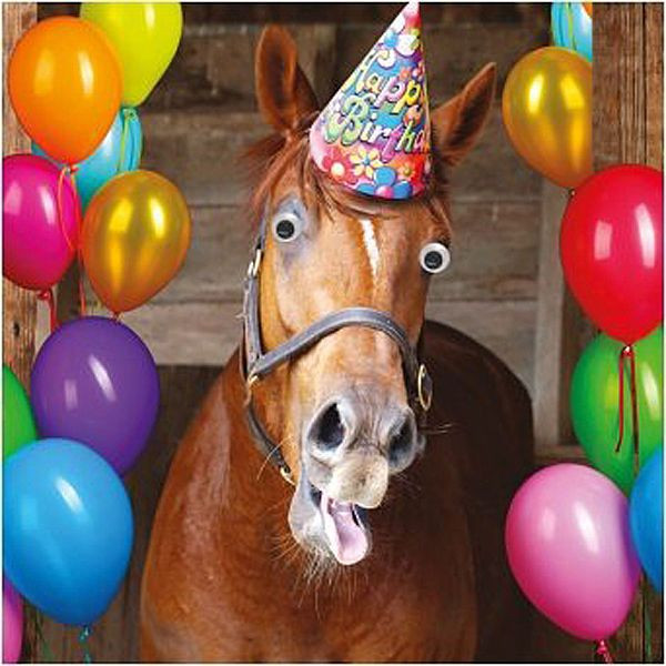 Funny Horse Birthday Pictures  Funny Humour Greeting Card Birthday 3d Moving Eyes Horse