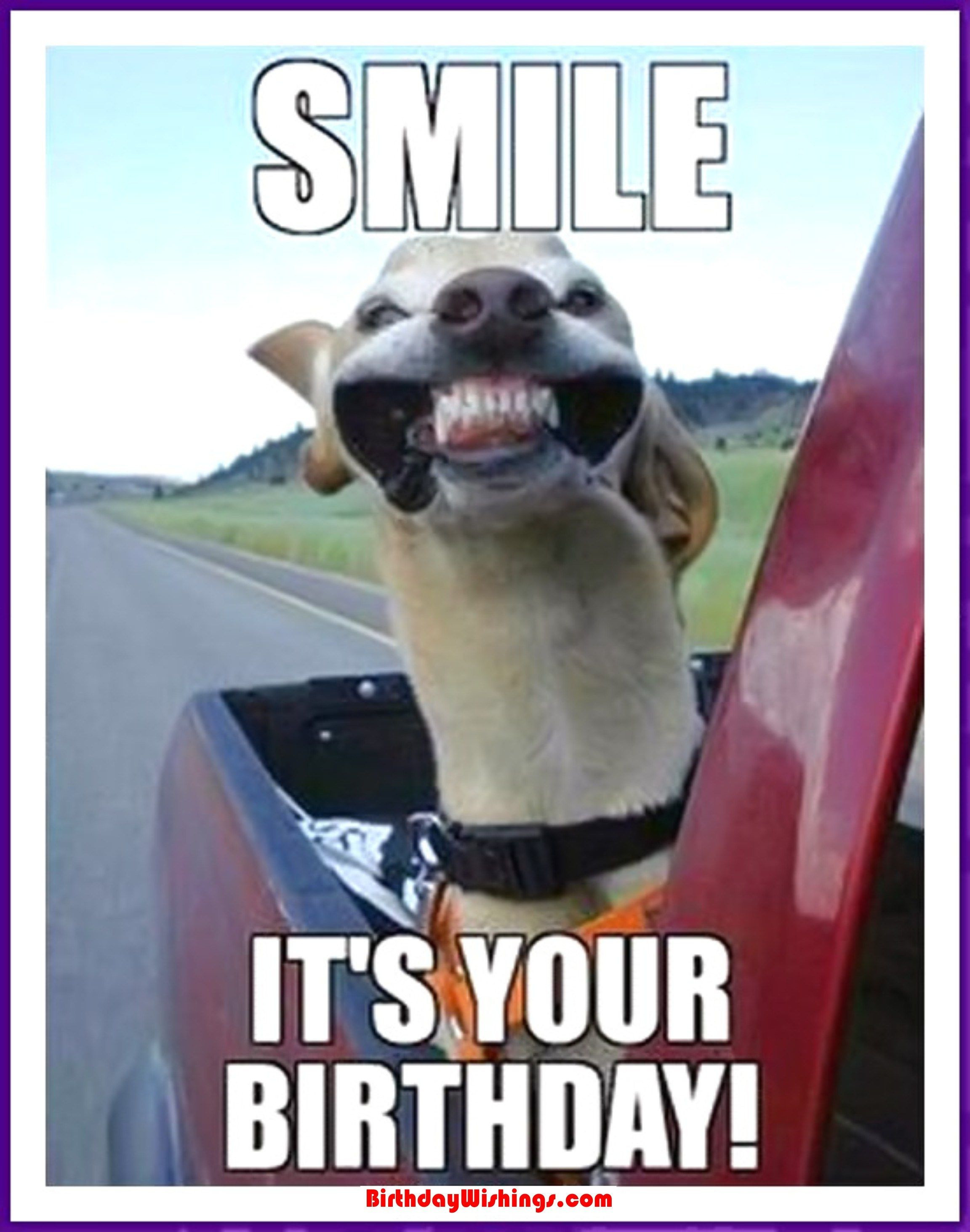 Happy Birthday Funny For Her  Funny Happy Birthday Memes With cats Dogs & Funny Animals