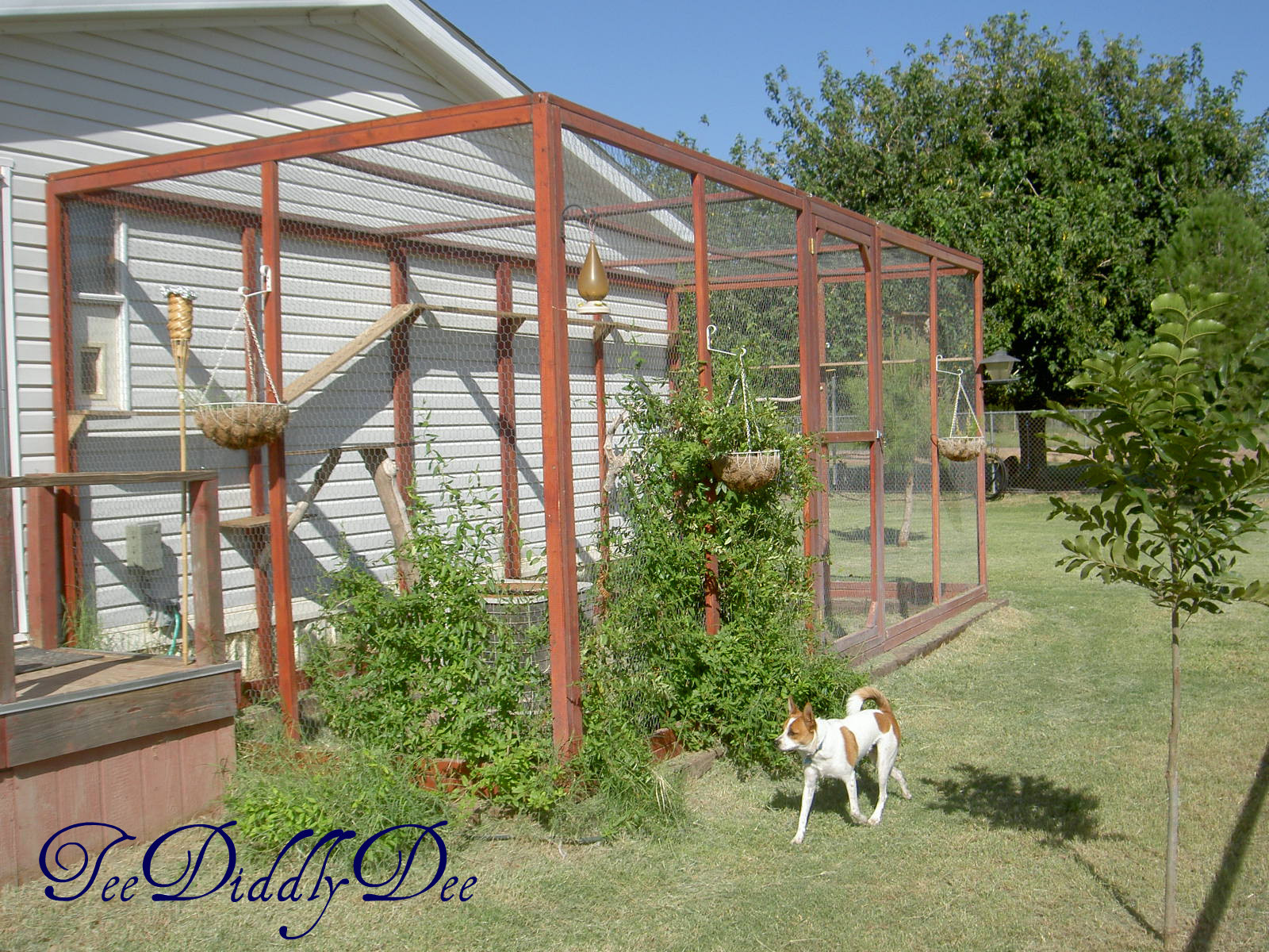 Outdoor Cat Enclosures DIY  How To build an outdoor cat enclosure or catio