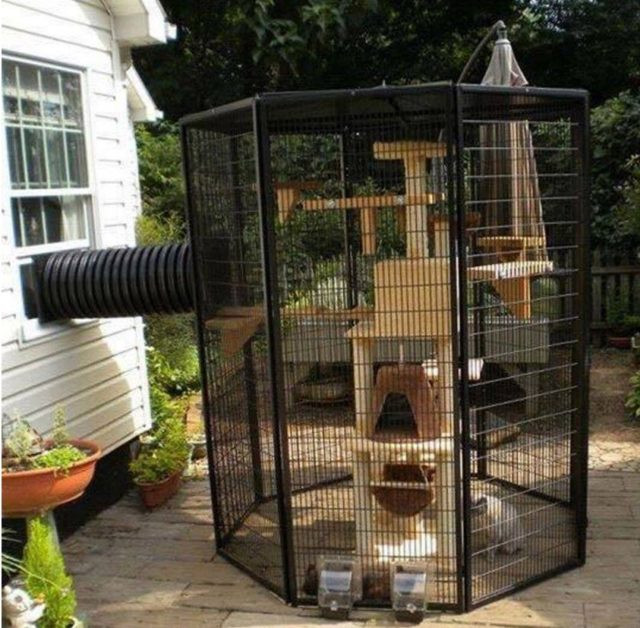Outdoor Cat Enclosures DIY  Home Design Garden & Architecture Blog Magazine