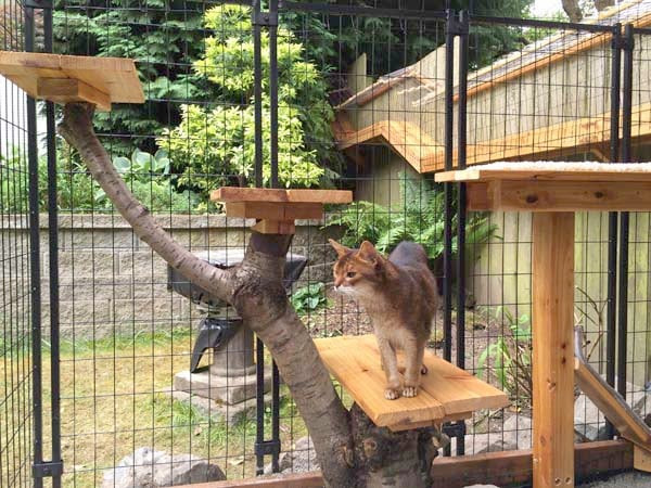 Outdoor Cat Enclosures DIY  Awesome DIY backyard Cat Enclosure