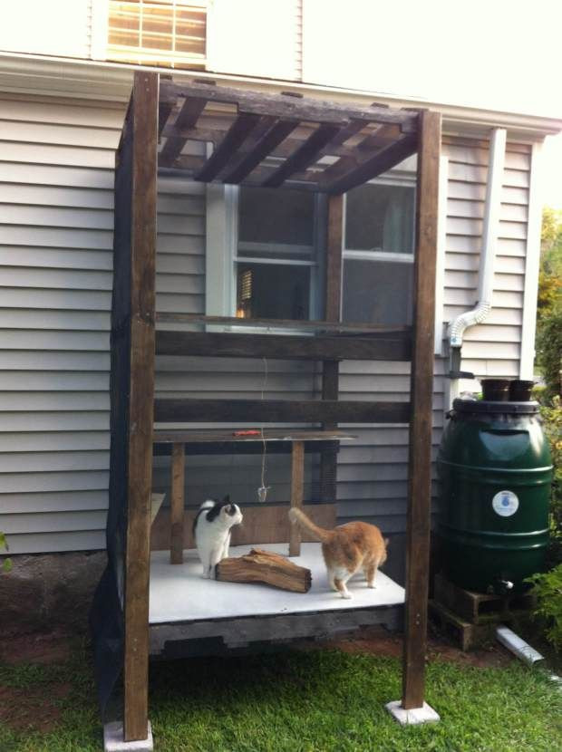 Outdoor Cat Enclosures DIY  Best 25 Outdoor cat tree ideas on Pinterest