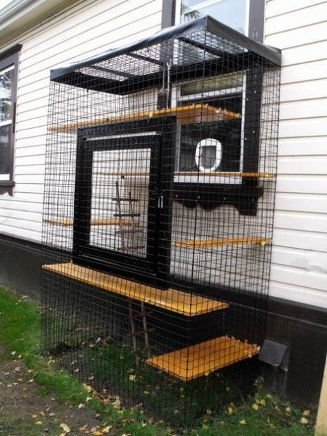 Outdoor Cat Enclosures DIY  Best 20 Outdoor cat enclosure ideas on Pinterest