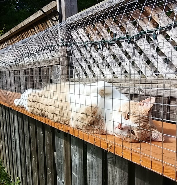 Outdoor Cat Enclosures DIY  Another awesome outdoor cat enclosure Cuckoo4Design