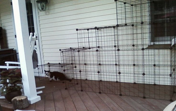 Outdoor Cat Enclosures DIY  Build A Do It Yourself Outdoor Cat Enclosure Run This