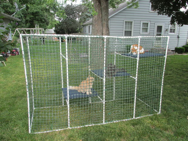 Outdoor Cat Enclosures DIY  Cat Enclosure 6 Steps with