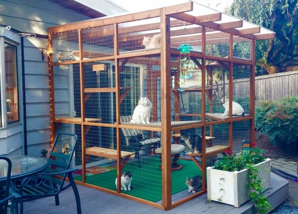 Outdoor Cat Enclosures DIY  Catios Can Be Built in Three Hours or Less and Let Your