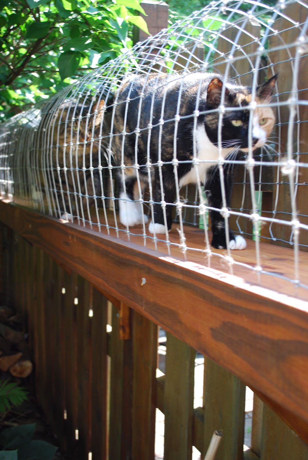 Outdoor Cat Enclosures DIY  Easy DIY Cat Enclosure Cuckoo4Design