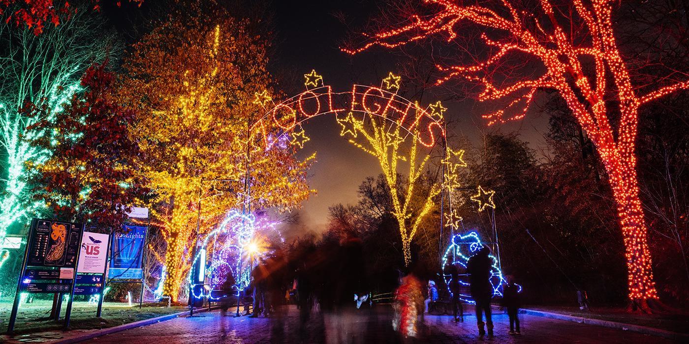 Christmas Tree Lighting Chicago 2019  Washington D C Area Christmas Light Displays 2017
