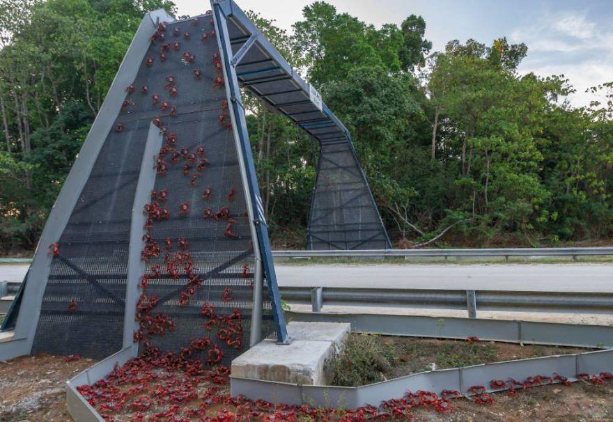 Great Bridge Christmas Parade  10 Amazing Animal Bridges And Crossings That Save 1000s