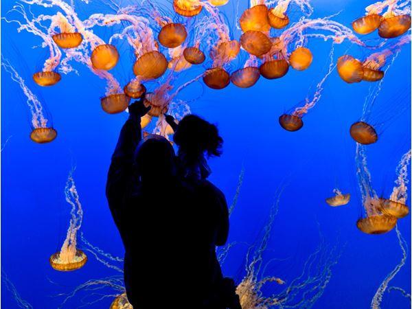 30 Best Ideas Monterey Bay Aquarium Christmas Hours - Home ...
