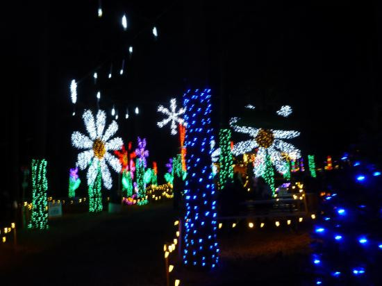 Oregon Garden Christmas  Christmas lights in the garden s Conifer Forest Picture
