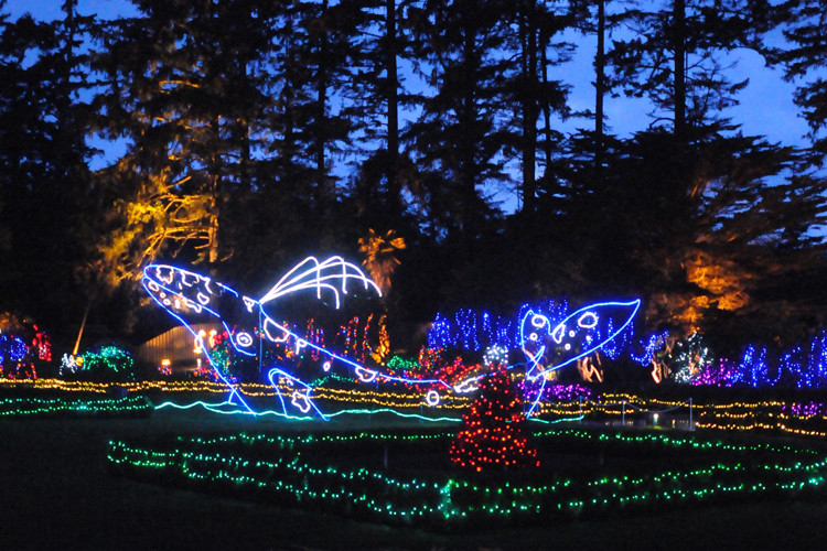 Oregon Garden Christmas  Holiday Lights at Shore Acres State Park on the Oregon Coast