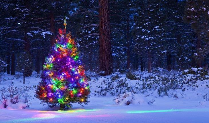Outdoor Light Up Christmas Tree  5 Best Outdoor Laser Lights Reviews 2019