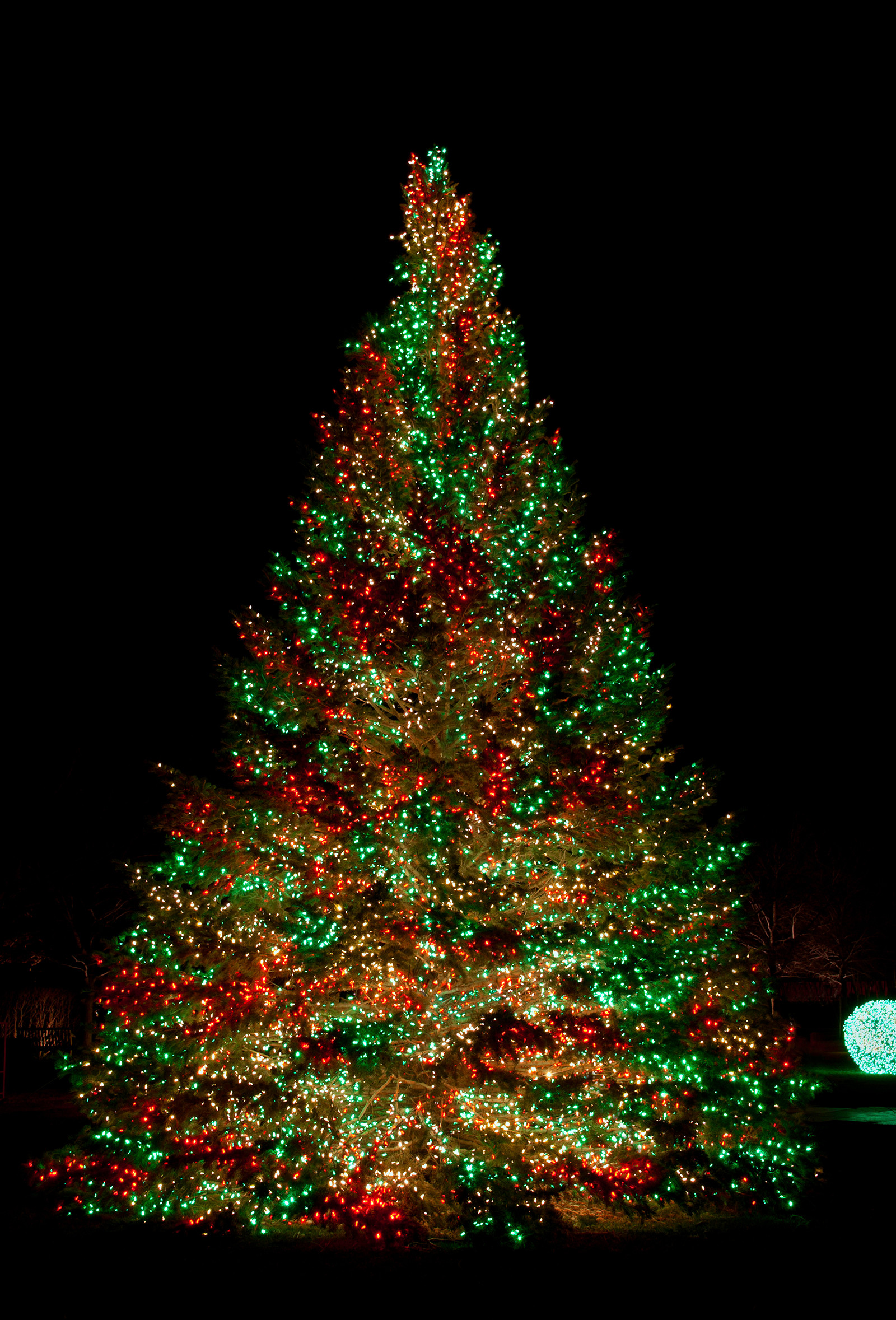 Outdoor Light Up Christmas Tree  11 Awesome And Dazzling Christmas Tree Lights Ideas