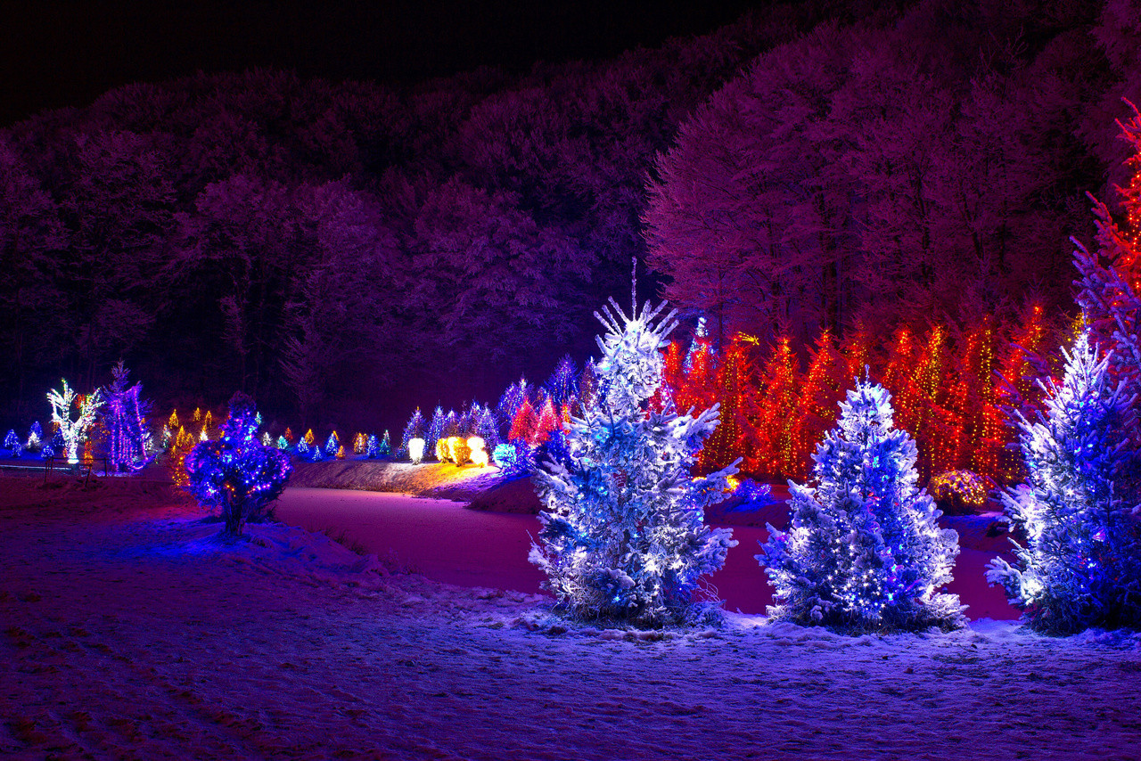 Outdoor Light Up Christmas Tree  Outdoor Christmas Trees