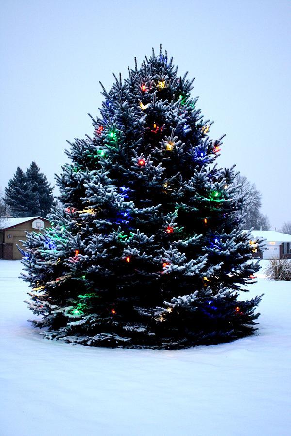 Outdoor Light Up Christmas Tree  Top Outdoor Christmas Tree Decorations Christmas