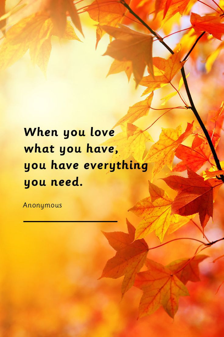 Thanksgiving Day Quotes  25 best Thanksgiving quotes ideas on Pinterest
