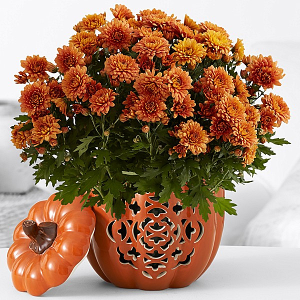 Thanksgiving Flower Delivery  Potted Flowers